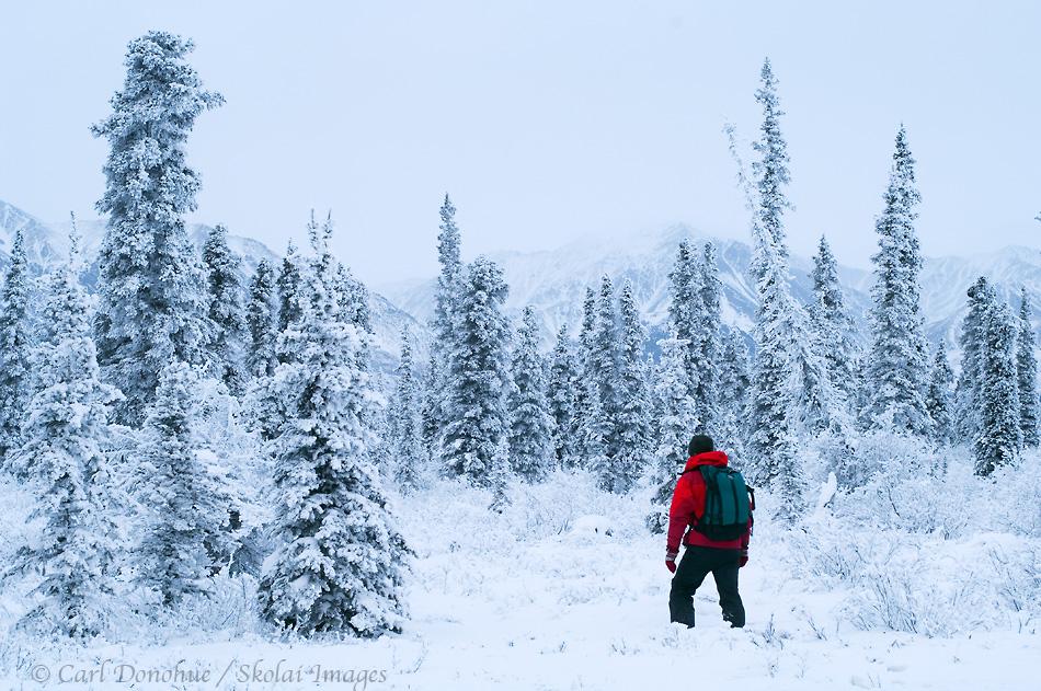 cold cold - Surviving a Sub-Zero Season