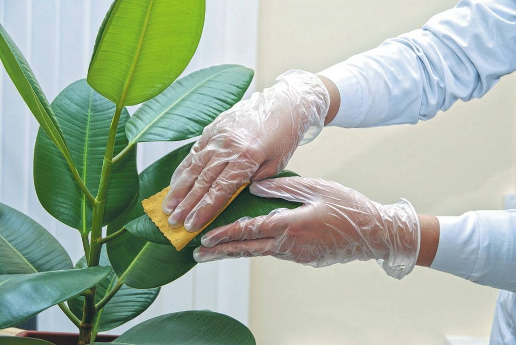 cleaning-dust-off-a-houseplant